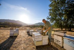 Rick Schubert of Bee Happy Apiary uses a smoker to calm his bees, which will motivate them to eat nectar and slow down a bit, making them easier to transport.
