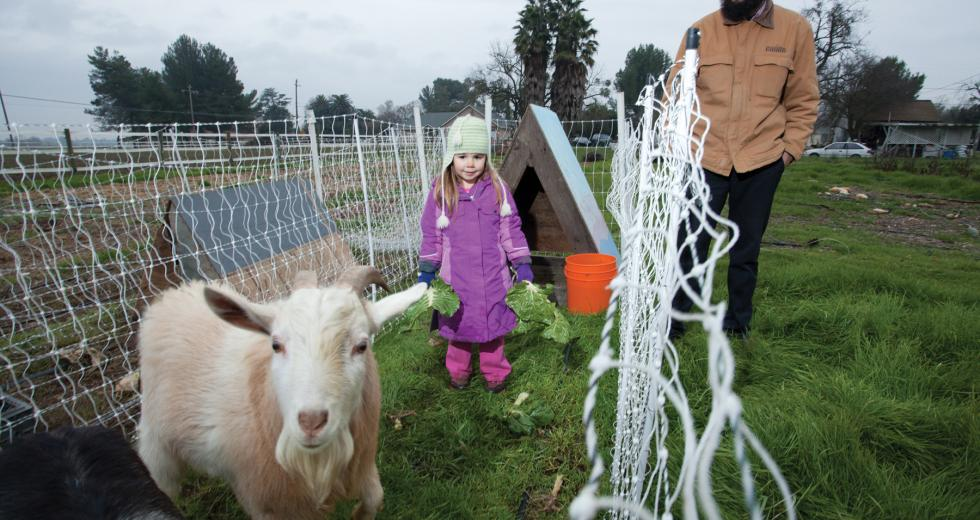 Urban farmer Dan Gannon maintains a half-acre plot in West Sacramento with help from 4-year-old daughter, Frankie.
