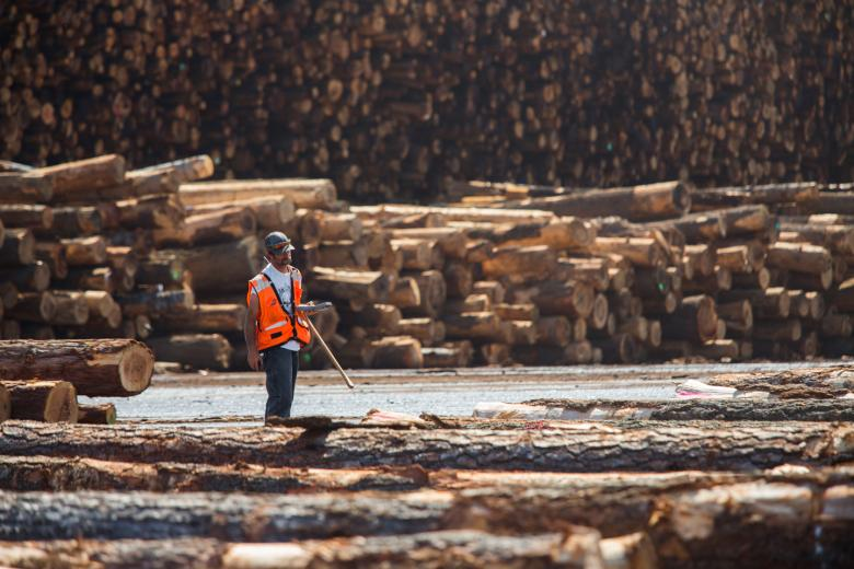 "One of the largest wood-manufacturing companies in California, Sierra Pacific Industries started with a small sawmill on the North Coast. Founded by ""Curly"" Emmerson in 1979 and followed by his son ""Red,"" the company now employs approximately 3,800 people."