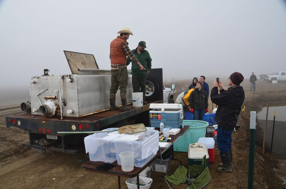 UC Davis doctoral candidate Jacob Katz (cowboy hat) and his study team measure and salmon fingerlings as part of the Nigiri Project, a study of how salmon benefit from spending time in inundated rice fields.
