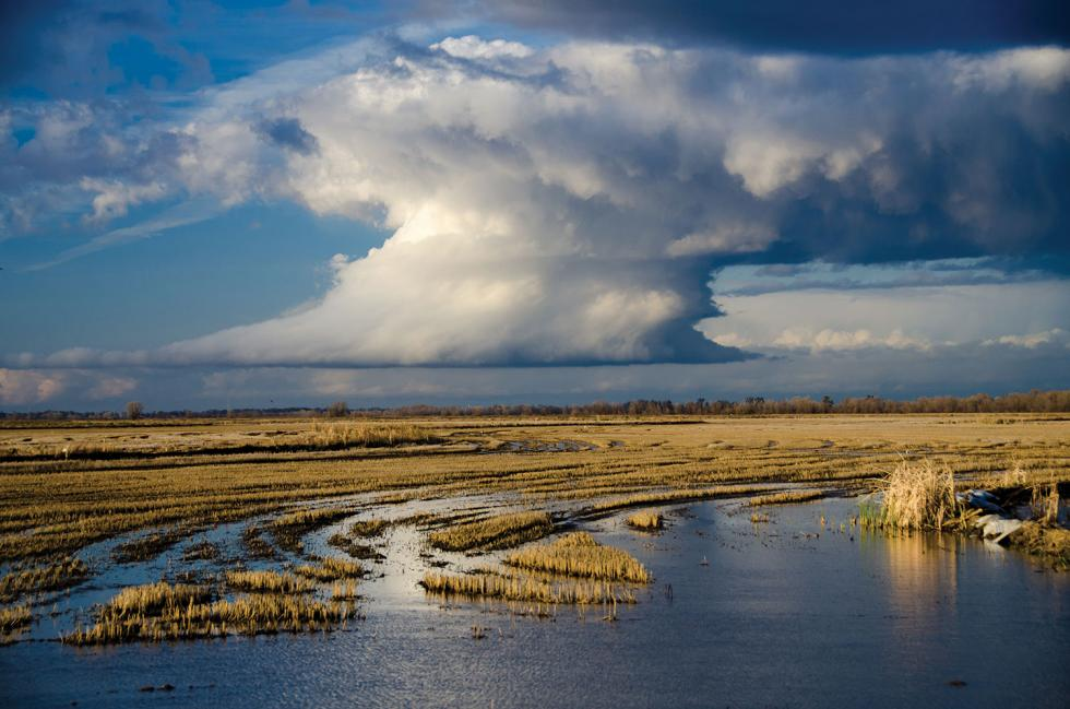 Floodplanes like the Yolo Bypass could provide salmon with safe downstream travel that bypasses dangerous water pumps in the Sacramento-San Joaquin Delta. The UC Davis Nigiri Project aims to test the impacts of this option.