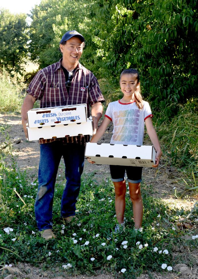 Clark Watanabe and his niece Laurel pick tomatoes at Watanabe Farms in West Sacramento.