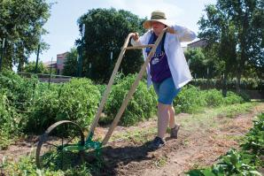 Hope Sippola, of Fiery Ginger Farm, uses a high wheel cultivator at her site in West Sacramento.