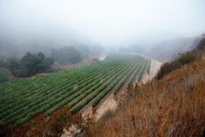 Pisoni Vineyards in the Santa Lucia Highlands