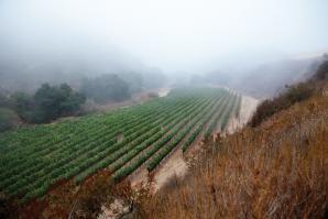 Pisoni Vineyards in the Santa Lucia Highlands  (photo: Kelly Turner)